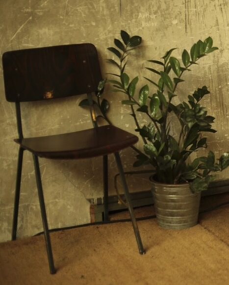 Potted ZZ plant next to chair