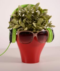 Potted plantl with sunglasses and headphones