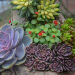 Arrangement of various succulent plants in garden