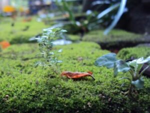 Whats in fairy gardens moss
