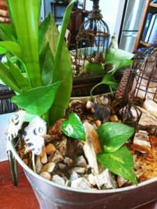 Fairy Gardens Water Feature Pothos