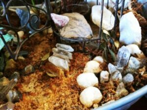 Top 10 Gardening Ideas for Fairy Gardens Crystal Steps