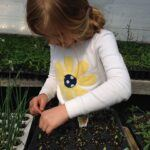 A Fairy Garden with Plants Child Learning