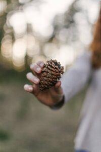 Top 10 Gardening Ideas for Fairy Gardens Find Pine Cone
