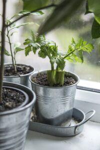 Top 10 Gardening Ideas for Fairy Gardens Kitchen Scraps
