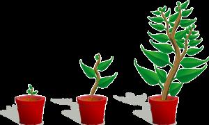 A Fairy Garden with Plants Growth Ratea-fairy-garden-with-plants-growth-rate