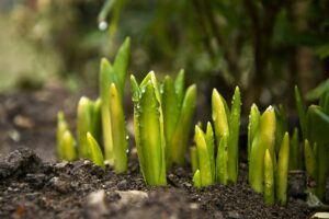 new garden seeds
