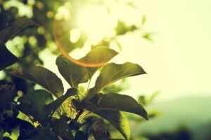 Garden design ideas sunGarden-design-ideas-sun