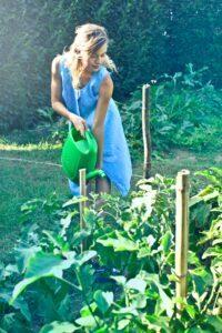 How to garden vegetables maintenence