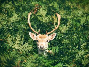 Garden design ideas wildlife deer