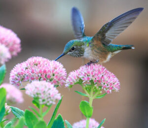 Garden design ideas wildlife hummingbird