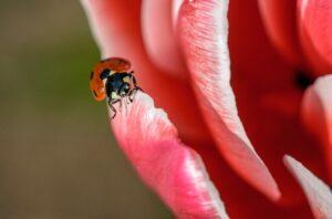 Garden design ideas wildlife ladybugGarden-design-ideas-wildlife-ladybug