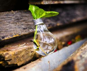 reused lightbulb as planter