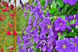 garden-1329823_640