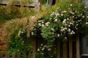 garden-1433054_640