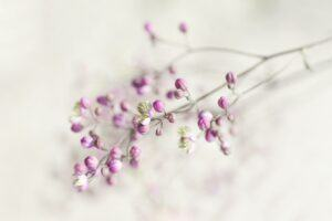 garden-plant-2564136_1280