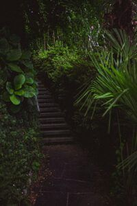 stairs surrounded by green plants