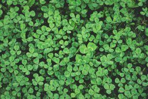 Garden design ideas clover