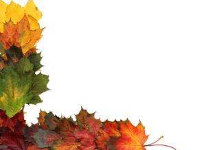 leaves-2854361_1280