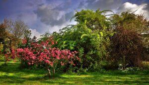Garden design ideas paradise