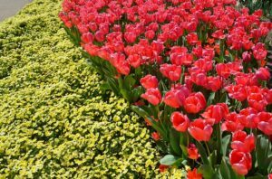 spring-1347122_640