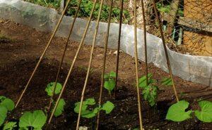 how to garden vegetables garden wall