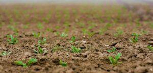 how to garden vegetables seedlings