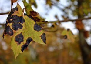 how to garden vegetables disease tree