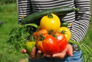 how to garden vegetables harvest