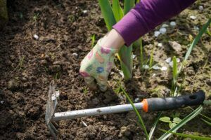 how to garden vegetables weeding