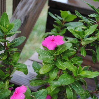 outdoor fairy garden ideas impatiens