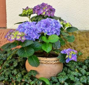 outdoor fairy garden ideas hydrangeas