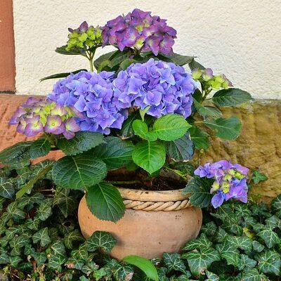 outdoor fairy garden ideas hydrangeas