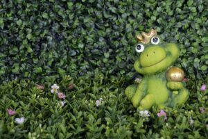 frog-1404357_640