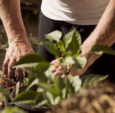 outdoor fairy garden ideas get gardening