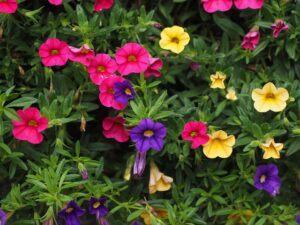 outdoor fairy garden ideas petuniasoutdoor-fairy-garden-ideas-petunias