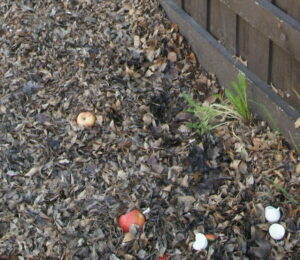 when to start gardening composting bedswhen-to-start-gardening-composting-beds