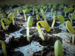 when to start gardening seed trays when-to-start-gardening-seed-trays