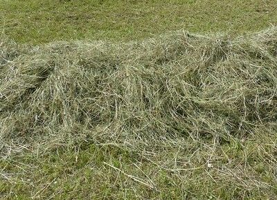 when to start gardening grass clippings