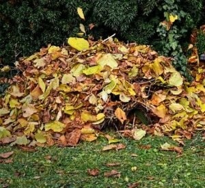 when to start gardening leaf compost