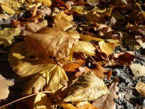 when to start gardening leaf litter