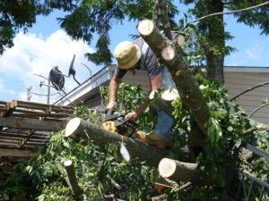 when to start gardening cutting treewhen-to-start-gardening-cut-tree