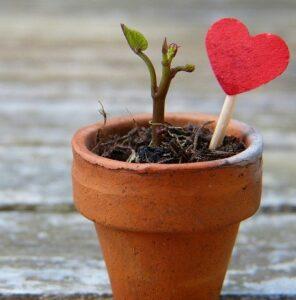 cheap garden plants grows easily