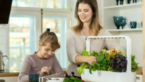 how to plant a garden in your home click and grow familyhow-to-plant-a-garden-in-your-home-click-and-grow-family