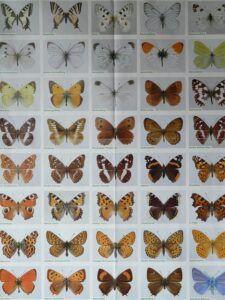 small butterfly garden plans speciessmall_butterfly_garden_plans_species