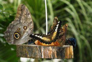 small butterfly garden plans fruitSmall Butterfly Garden Plans