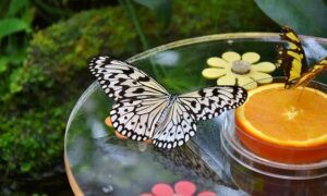 butterflygardenfruitdish
