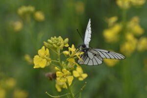 small butterfly garden plans mustardssmall_butterfly_garden_plans_mustard