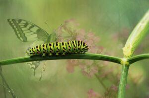 small butterfly garden plans caterpillarSmall Butterfly Garden Plans